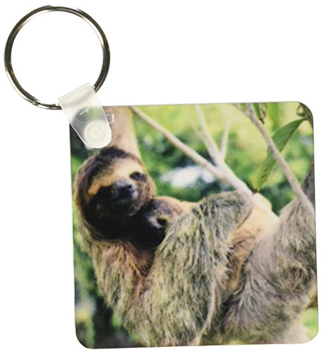 3Drose Three-Toed Sloth Wildlife, Corcovado Np, Costa Rica - Sa22 Ksc0137 - Kevin Schafer - Key Chains, 2.25 X 4.5 Inches, Set Of 2 (Kc_87218_1) - 3D Rose (Home Improvement)