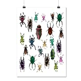 Beetle Type Habitat Insect Life Matte/Glossy Poster A3 (42cm x 30cm) | Wellcoda