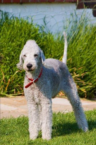 The Bedlington Terrier Dog Journal: 150 page lined (Bedlington Terrier)