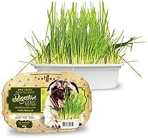 Ipet Green Digestive Grass Graminha Para Cães 50G IPET para Todas Todos os tamanhos de raça Todas as fases - Sabor Outro