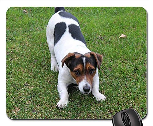 Gaming Mouse Pads,Mouse mat,Dog Jack Russell Terrier Fun Friend Small Dog