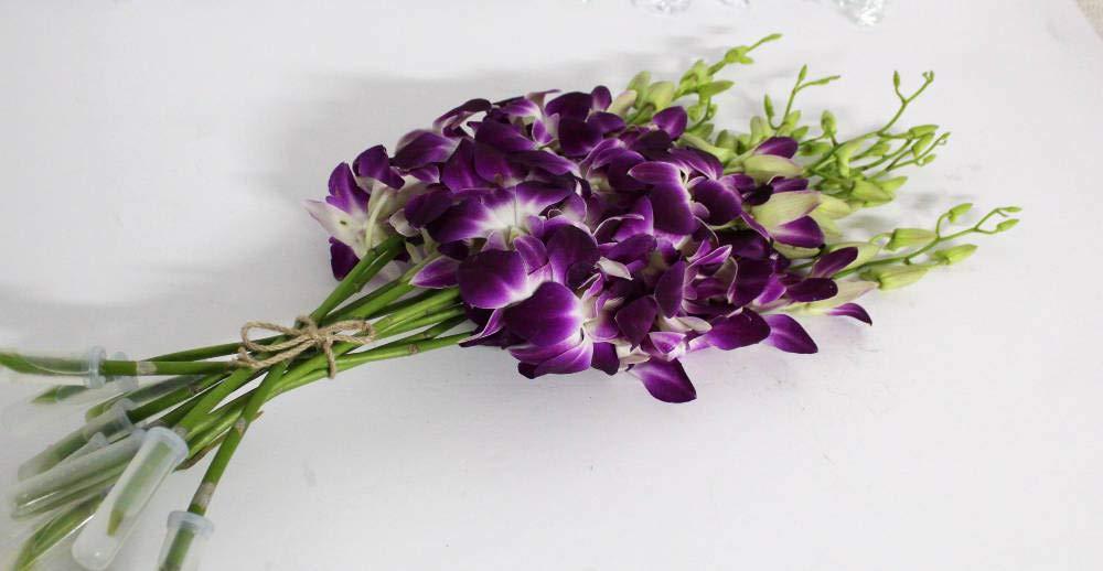 silk flower arrangements athena's garden full, live fresh box dendrobium sonia/galaxy/bombay cut orchids, 7 bunches, vibrant purple