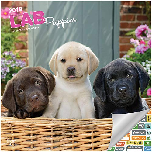 (Labrador Retriever Puppies Calendar 2019 Set - Deluxe 2019 Labrador Retriever Puppies Wall Calendar with Over 100 Calendar Stickers (Labrador Retriever Puppies Gifts, Office Supplies))