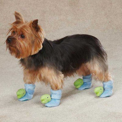 Casual Dog Boots Canine (Casual Canine ZW3897 03 19 Dino Dog Slipper, X-Small, Blue)