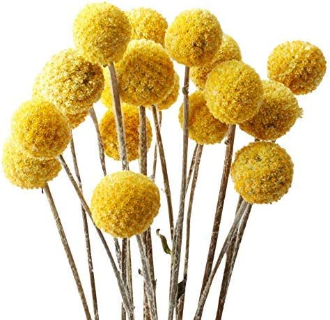 Amazon Com Lavenda Natural Dried Flowers Large Billy Balls