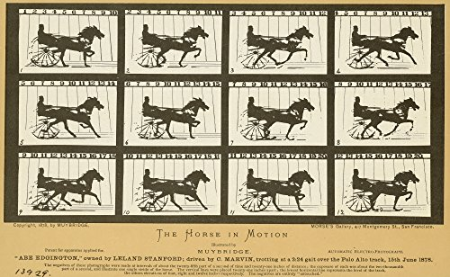 Early Photography 1878 None Of Eadweard MuybridgeS 1878 Photographic Studies Of A Horse In Motion At Palo Alto Racetrack California The Study Sponsored By Leland Standord Was Made With A Row Of Camera