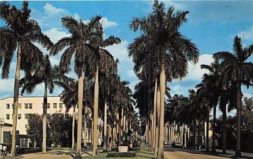 - Palm Beach, Florida Postcard