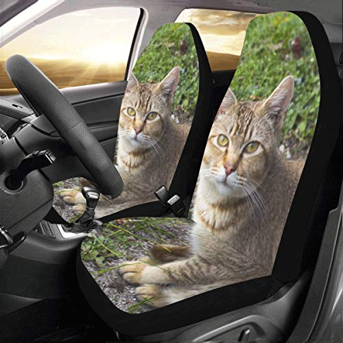 - Lucky High Cold Cat Custom New Universal Fit Auto Drive Car Seat Covers Protector for Women Automobile Jeep Truck SUV Vehicle Full Set Accessories for Adult Baby (Set of 2 Front)