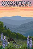 Gorges State Park, Transylvania County, North Carolina - Bears and Spring Flowers (16x24 Gallery Quality Metal Art)