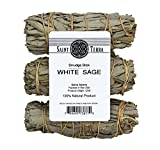 Saint Terra - Pack of 3 Mini White Sage Smudge Stick, 4 inches Long