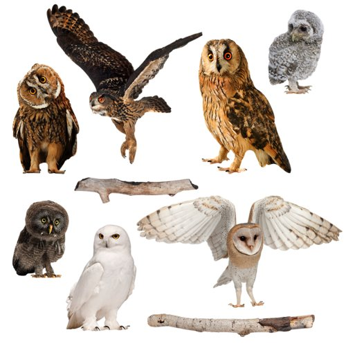 Amazon.com: Realistic Owls Wall Decals: Home & Kitchen