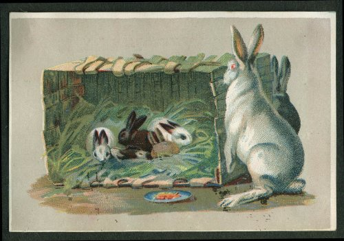 H Winkelman Groceries Canned Fruit NYC trade card rabbits in a basket nest 1880s