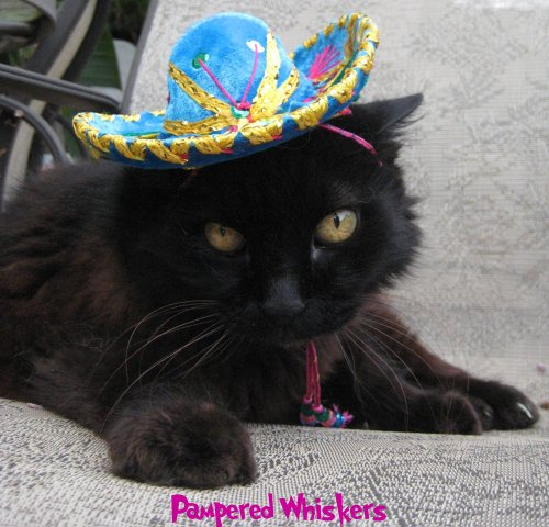 Pampered Whiskers Teohuacan Turquoise Miniature Sombrero hat for Dogs and Cats by Pampered Whiskers
