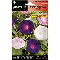 Semillas de Flores - Ipomea-Maravillas Trepadora variada - Batlle