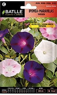 Huerto Urbano - Mix de flores Profesional (Ornamentales grandes ...