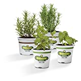 Bonnie Plants Cocktail Herb Plant Garden Live Herb Plants - 4 Pack, Basil, Mint, Lavender & Rosemary, Drink Garnish Plants