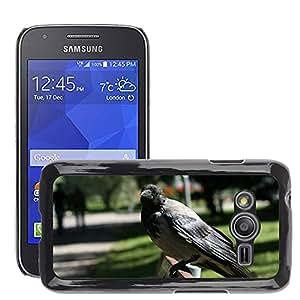 Super Stella Slim PC Hard Case Cover Skin Armor Shell Protection // M00107000 Corvus Cornix Hooded Crow Bird Fly // Samsung Galaxy Ace4 / Galaxy Ace 4 LTE / SM-G313F
