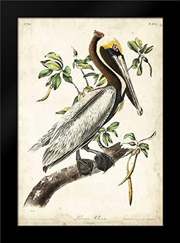 Brown Pelican 18x24 Framed Art Print by Audubon, John ()