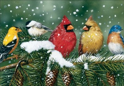 It Takes Two 5 Birds Sitting on Pine Tree Boxed Christmas Cards - Pkg. of 10