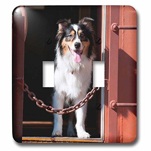 danita-delimont-dogs-australian-shepherd-in-a-train-car-light-switch-covers-double-toggle-switch-lsp