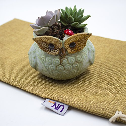 UName Micro Landscape Succulent Plants Creative Flower Planters, Mini Plants Pot, Ceramics Decoration, Handmade, Small Plant Containers, Owl Design Su…