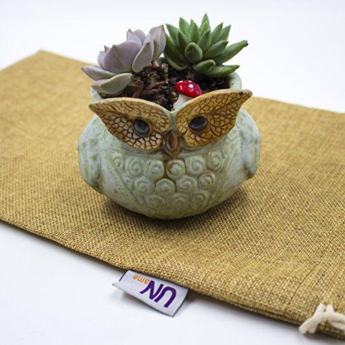 UName Micro Landscape Succulent Plants Creative Flower Planters, Mini Plants Pot, Ceramics Decoration, Handmade, Small Plant Containers, Owl Design Su…