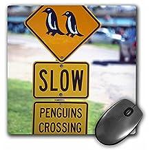 3dRose LLC 8 x 8 x 0.25 Inches Mouse Pad, Jay Sturdevant (mp_74666_1)