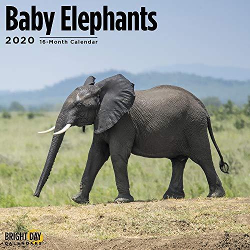 2020 Baby Elephants Wall Calendar