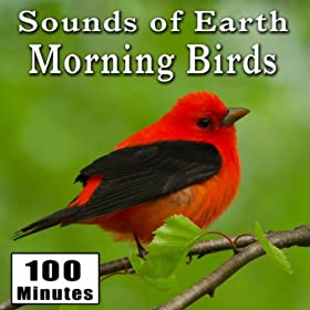 Amazon Com Early Morning Wild Birds Chirping And Activity