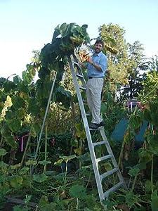 Image Result For How To Start A Sunflower Garden