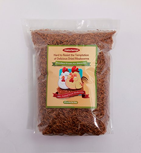 5 Lbs Dried Mealworms for Wild Bird Chicken Fish