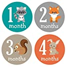 Pinkie Penguin Woodland Animals Baby Monthly Stickers - Milestone Onesie Stickers - Baby Boy - 1-12 Months - Baby Shower Gift