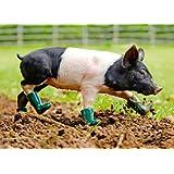 GEO-Postkarte 030 Unschweinisch