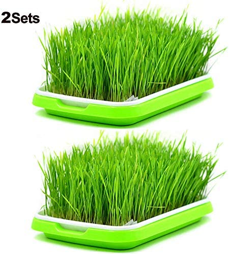 2 Sets Sprouter Tray BPA Free PP Soil-Free Densely Small Hole Healthy Wheatgrass Grower 13.4×9.84×1.77inch