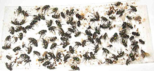 200 pk ALL Insect / Fly Traps / Sticky Strips / Glue Boards.(Twenty 10 pks) Trap Flies, bees, wasps, asian beetles, etc. by TredNot