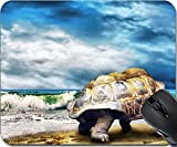 Msd Turtle Beach Mouse Pads - Best Reviews Guide