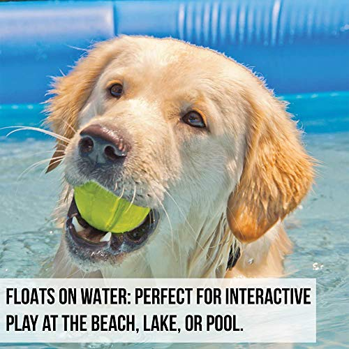 Hyper Pet Chewz Dog Toys for Large Dogs (Dog Ball, Dog Bone & Dog Stick Dog Chew Toys) [Lightweight, Resilient EVA Foam Dog Toy is Safe on Teeth, Easy to Clean, & Floats on Water for Interactive Play]