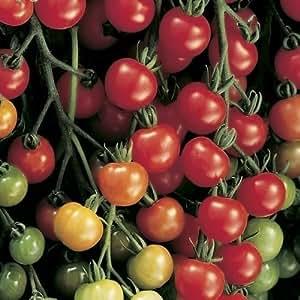 seekay Tomate F1 Súper Dulce 20 - Vegetal/Fruta