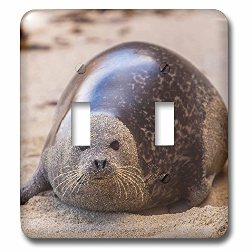 Danita Delimont - Animals - La Jolla Cove, San Diego, Harbor Seal on the Beach - Light Switch Covers - double toggle switch (lsp_230174_2)