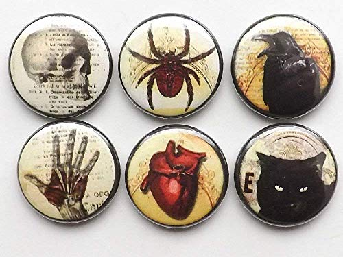 Halloween Refrigerator Magnets Skull Anatomical Heart Black Cat Raven Spider Spooky Scary Goth Gifts