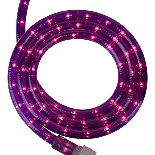 Magenta Led Lights