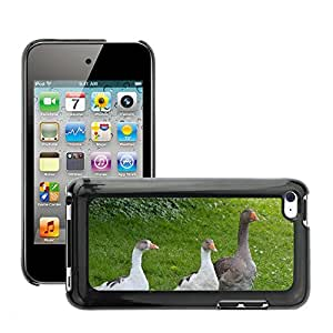 GoGoMobile Slim Protector Hard Shell Cover Case // M00124707 Geese Poultry Bird // Apple ipod Touch 4 4G 4th