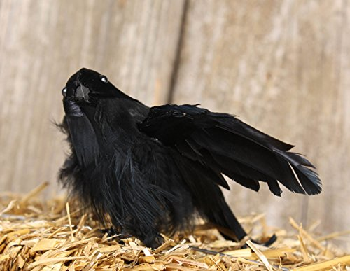 Factory Direct Craft Group of 6 Flying Black Crow Birds for Halloween Decor and Costumes -