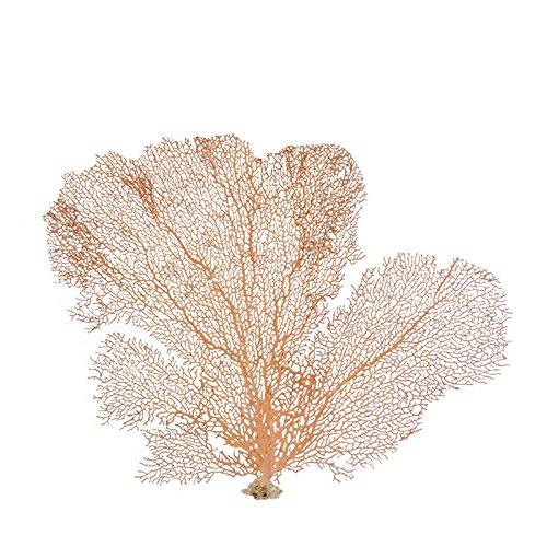 "The Seashell Company Natural Sea Fan Coral - Red 7-10"""