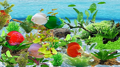 Amazon River Discus [Download] by Waterfall Animation