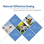 galaxer pet cooling mat cool mat for dogs non toxic ice silk material dog mat give your dog or cat a cooling summer (l 70 * 56cm) Galaxer Pet Cooling Mat Cool Mat for Dogs non Toxic Ice Silk Material Dog Mat Give your Dog or Cat a Cooling Summer (L 70 * 56cm) 51L 2B9FM8a3L