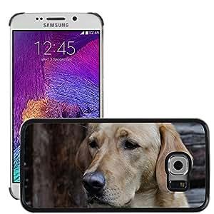 Super Stella Slim PC Hard Case Cover Skin Armor Shell Protection // M00106270 Dog Labrador Head Close Pet // Samsung Galaxy S6 EDGE (Not Fits S6)