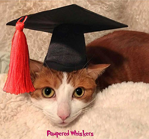 Pampered Whiskers Dog Graduation Cap for dogs and cats Red tassel (Small- 6-11