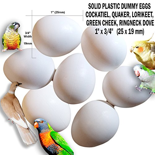 """Fake Bird Eggs Stop Laying! Dummy Eggs Set of 7: Cockatiel Quaker Parrot, Green Cheek, Lorikeet Ringneck Dove White Solid Plastic Realistic 1"""" x 3/4"""" 25 x 19 mm (Set of 7)"""