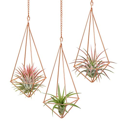 Dahey 3 Pcs Hanging Air Plant Holder Himmeli Geometric Planter Metal Airplant Rack Tillandsia Hanger with Chain in Modern Rustic Art Style for Home Decor Rose ()